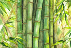 Green bamboo background. Royalty Free Stock Photography