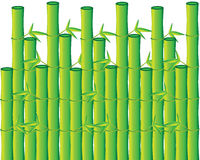 Green bamboo background Stock Photos
