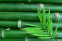 Green bamboo background with leaf Stock Photo
