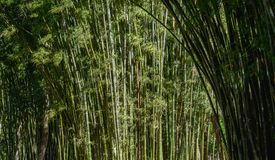 Green bamboo background in nature. Stock Photos