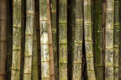 Green bamboo background texture Stock Image