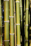 Green bamboo background. Green bamboo tree in a garden., Green bamboo background Stock Photo