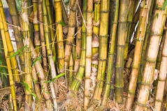 Green bamboo background Stock Photo