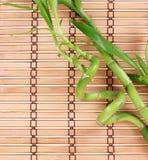 Green bamboo on bamboo mat Royalty Free Stock Image