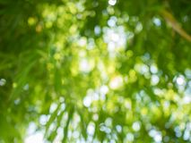 Green bamboo bokeh in the background stock image