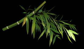 Green bamboo branch isolated on black illustration Royalty Free Stock Photo