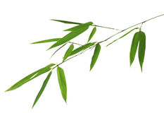 Green bamboo branch on white Stock Photo