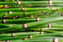 Green bamboo close up Royalty Free Stock Photos