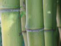 Green bamboo close-up Royalty Free Stock Images
