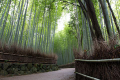 Green bamboo corridor Royalty Free Stock Photography