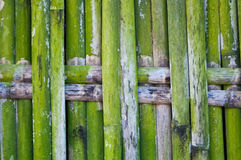 Green bamboo fence Stock Images