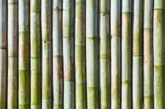 Green bamboo fence Stock Photo