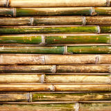 Green bamboo fence background Stock Photography