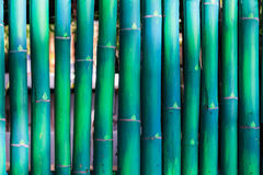 Green bamboo fence Royalty Free Stock Photography