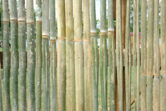 Green bamboo fence. For background Stock Images