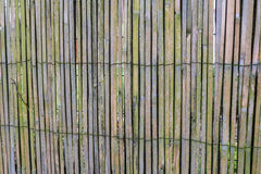 Green bamboo fence background Stock Photos