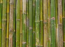 Green bamboo fence background texture pattern Royalty Free Stock Photography
