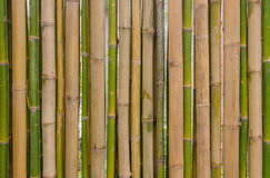 Green bamboo fence background texture pattern Stock Photography