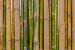 Green bamboo fence background texture pattern Royalty Free Stock Photo