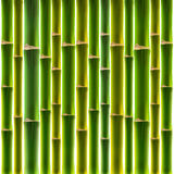 Green bamboo fence background Royalty Free Stock Photo