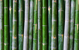 Green bamboo fence Royalty Free Stock Images
