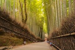 Green bamboo fence Bamboo forest on Arashiyama, Kyoto, Japan Royalty Free Stock Image