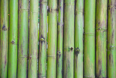 Green bamboo fence pattern Royalty Free Stock Photography