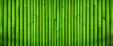 Green bamboo fence texture, bamboo texture background Royalty Free Stock Images