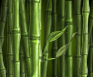 Green bamboo forest. Bamboo forest on a green background Stock Photo