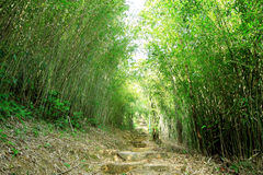 Green Bamboo Forest. A path leads through a lush bamboo forest in Taiwan Stock Image