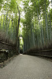 Green bamboo forest in Arashiyama, Japan Stock Photography