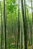 Green bamboo forest Royalty Free Stock Photos