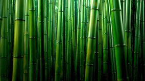 Free Green Bamboo Forest Texture Background, Bamboo Texture Panorama Stock Photo - 136852920