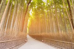 Green bamboo forest with walking way. Arashiyama Kyoto Japan Stock Photo