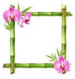 Green Bamboo Frame with Pink Orchid Flowers  on White Stock Photography