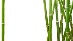 Green bamboo framed on white background with copy space.  Royalty Free Stock Photo