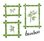 Green bamboo frames. Vector illustration. Stock Image