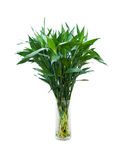 Green bamboo in a glass vase Stock Photos