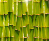 Green bamboo grove Royalty Free Stock Image
