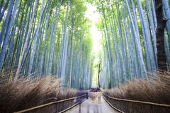 Green bamboo grove in Arashiyama Royalty Free Stock Photos