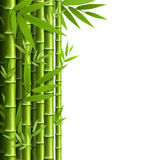 Green bamboo grove isolated on white Royalty Free Stock Photography