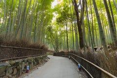 Green bamboo grove and walking way in Arashiyama Kyoto, Japan. Natural landscape background Royalty Free Stock Photos