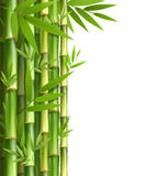 Green bamboo grove  on white Stock Image