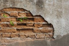 Green bamboo growing from crack of stone wall Stock Image
