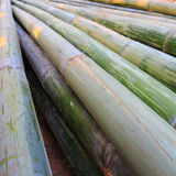 Green bamboo Royalty Free Stock Image