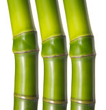 Green bamboo. Isolated in white background Royalty Free Stock Image