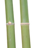 Green bamboo joint Royalty Free Stock Photo