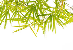 Green Bamboo leaf background Royalty Free Stock Photography