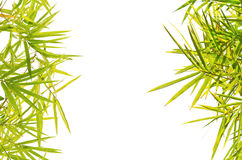 Green Bamboo leaf background Stock Photography