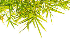 Green Bamboo leaf background Stock Images